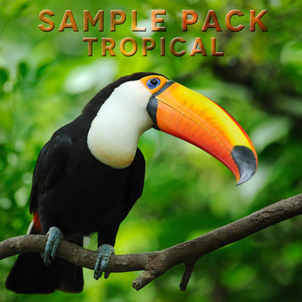 Renato Caruso – Sample Pack Tropical